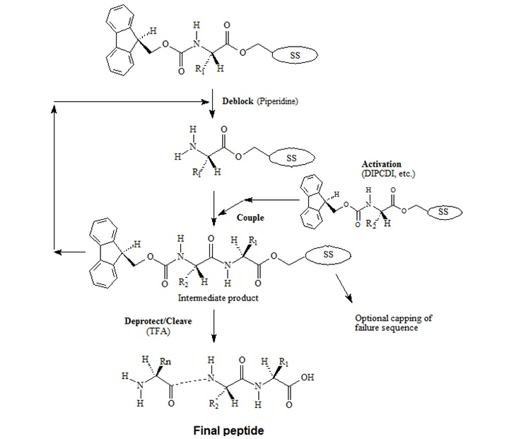 Fmoc-Chemistry for Peptide Synthesis