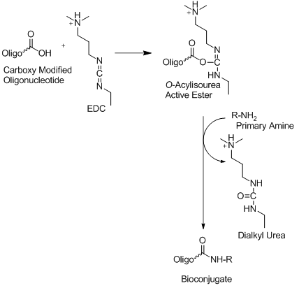 carboxyl and alkylamino reactoin