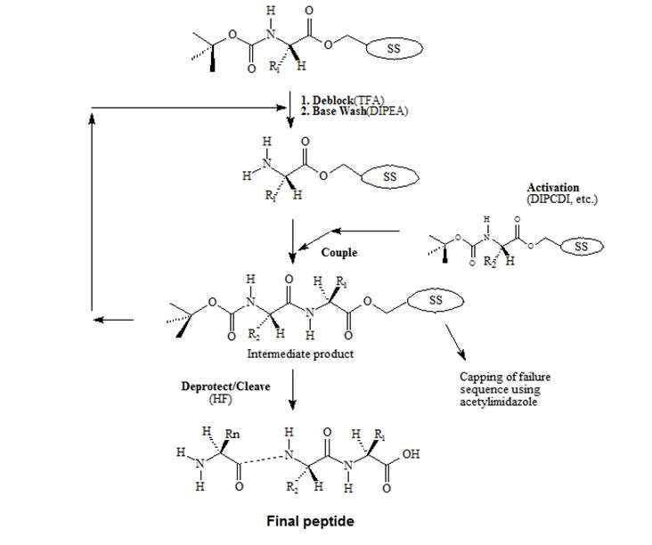 tBoc-Chemistry for Peptide Synthesis