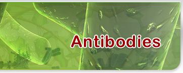 Biosyn Antibodies