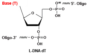 L-DNA dT Modfication