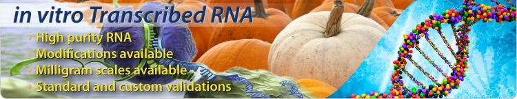 Long RNA Transcription Transcripts