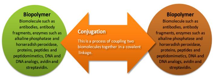 Bio-Synthesis, Inc. - Biopolymer Conjugations