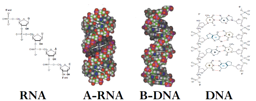 Purines, Pyrimidines, and Nucleotides