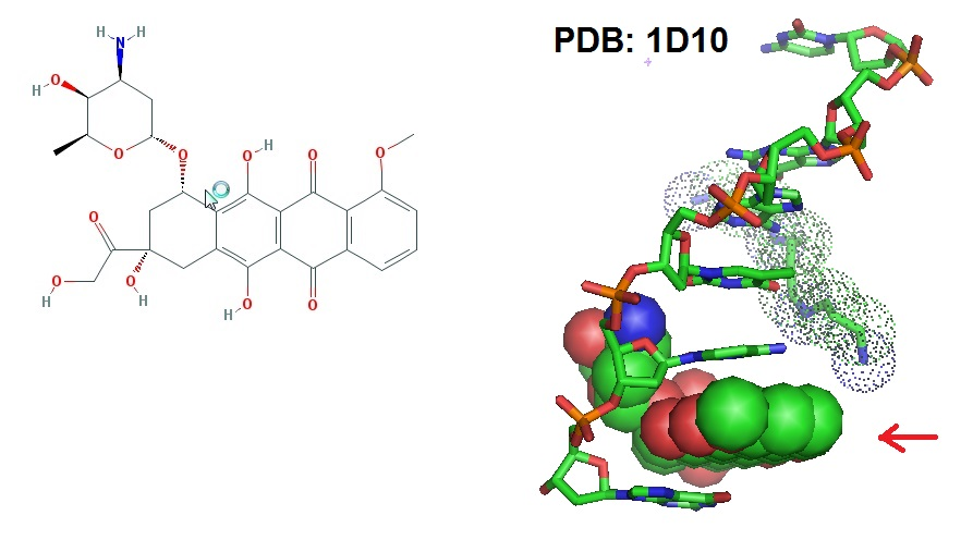 Doxorubicin conjugates right 3d structure of the drug dna complex frederick et al in 1990 solved the 3d structure for the drug dna complex between the drug ccuart Image collections