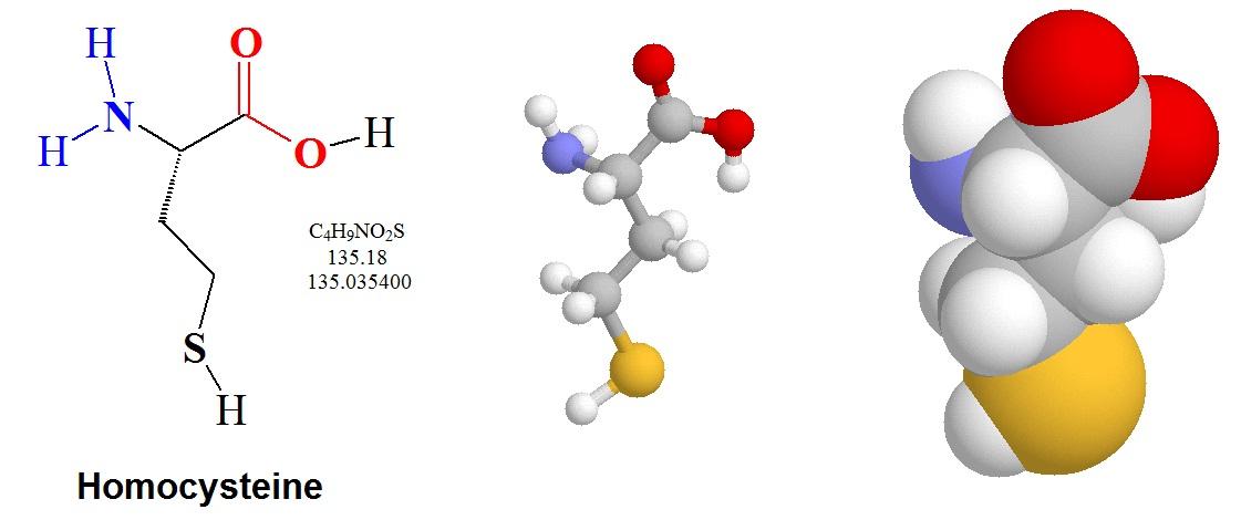 amino acid quantitative analysis Quantitative amino acid analysis aurélie lolia applications manager, biochrom ltd quantitative amino acid analysis principles of amino acid analysis ion exchange chromatography the biochrom 30 physiological.