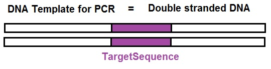 pcr template amount - what is needed to amplify a segment of dna