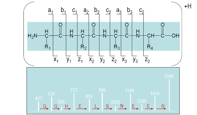 Sequence Nomenclature for Mass Ladder