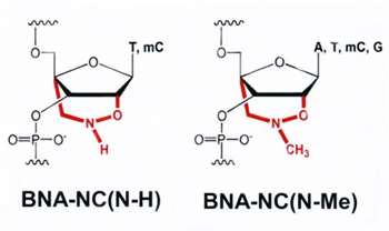 Design of BNANC Oligonucleotides