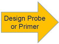 Probe & Primer Design Workflow