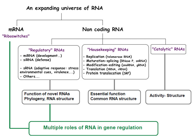 A few types of RNAs Produced in Cells