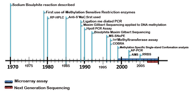 Time line of DNA methylation analysis