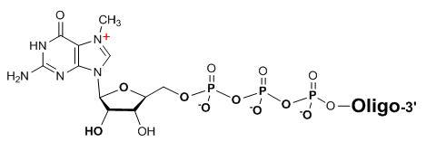 Bio-Synthesis Inc. Oligo Structure