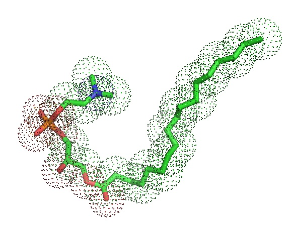 1-Stearoyl-sn-glycero-3-phosphocholine