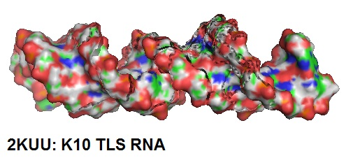 2KUU-K10-TLSRNA