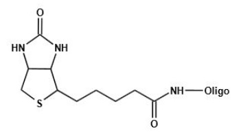 Biotin-oligo
