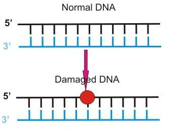 DNA-Damage