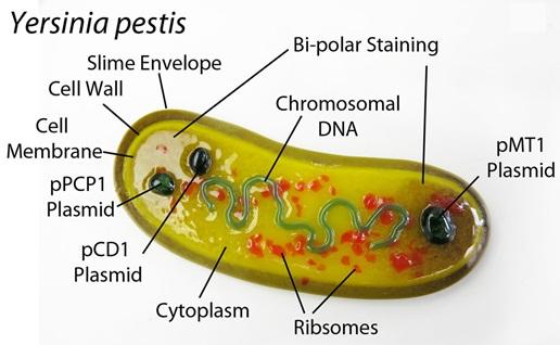 Plage Bacillus