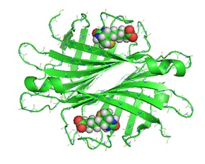 Streptavidin biotin