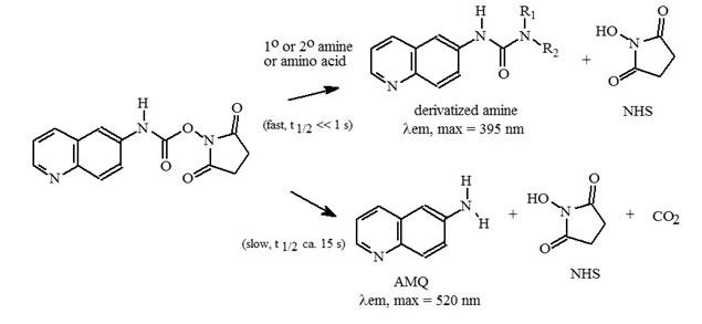 Amino Acid Analysis (AAA) Chemistry | Bio-Synthesis