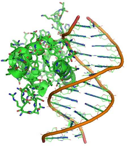 A FOXO4 retro-inverso peptide reverses aging