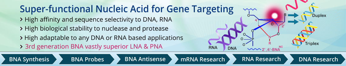 Super-functional Nucleic Acid for Gene Targeting