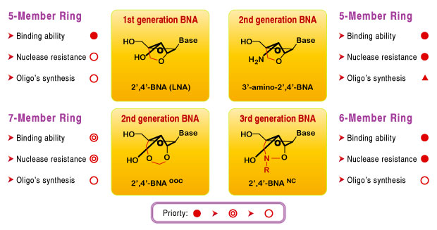 Type of BNA Bases