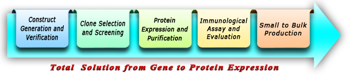 Protein Expression Services