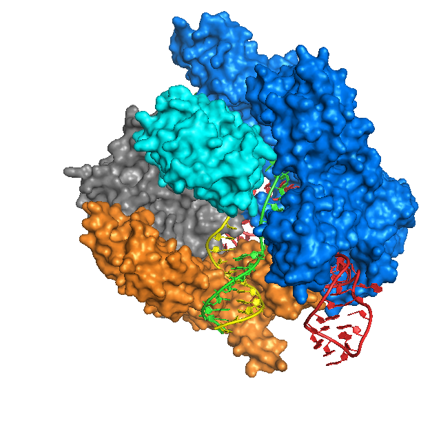 Cas9_Anders_DNA_bound_structure