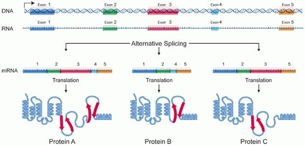 Splice switching oligonucleotides