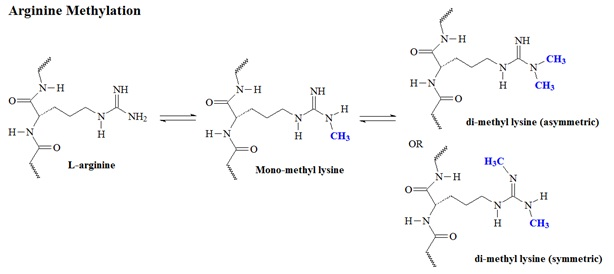 Mechanisms of Protein Lysine and Arginine Modifications