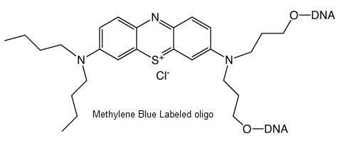 Methylene Blue Oligo Labeling