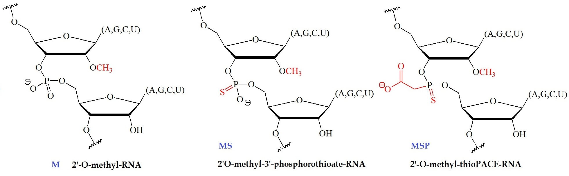 What are Backbone Modifications in Oligonucleotide Synthesis