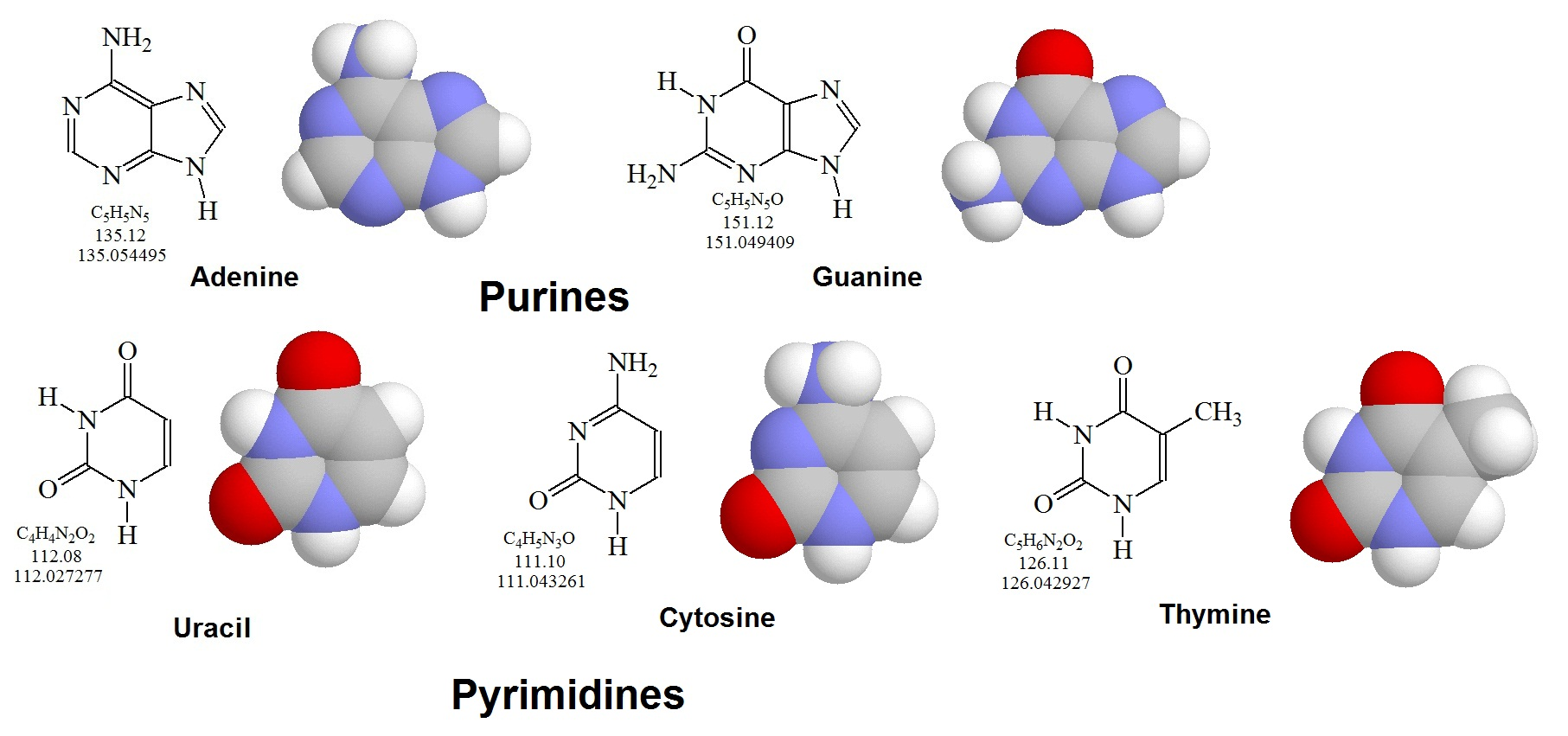 Purines pyrimidines and nucleotides figure 1 general nucleotide structure showing the numbering convention for the pentose ring the carbon atoms of the pentoses are numbered with primes ccuart Choice Image