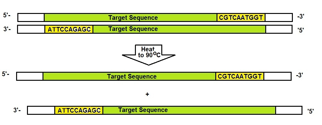 What is needed to amplify a segment of DNA