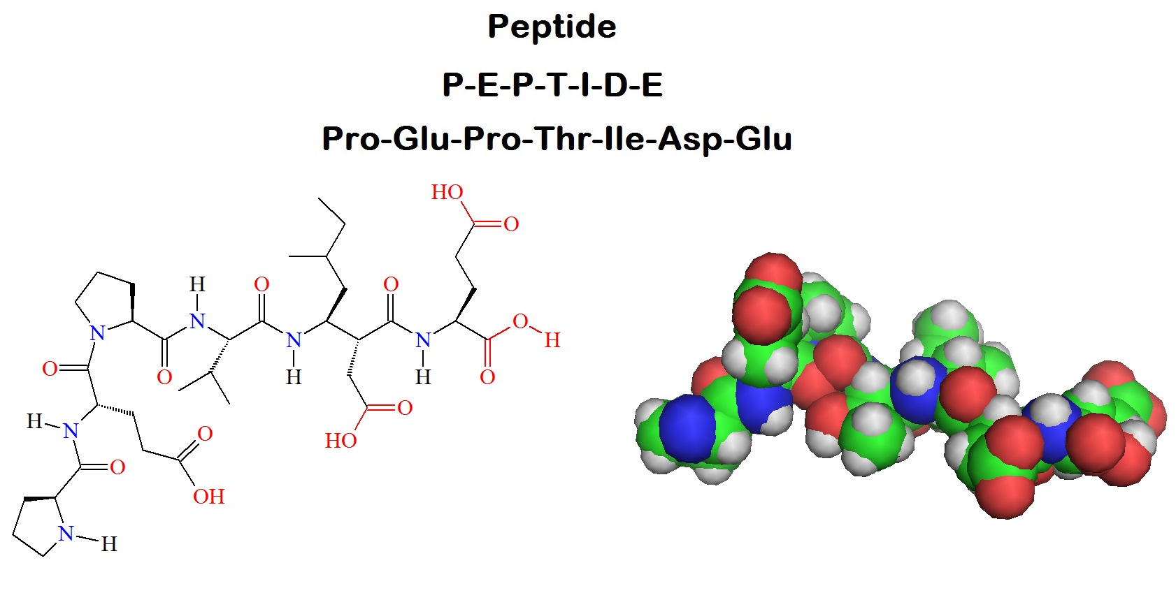 Image of Peptide under research
