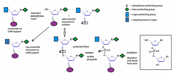 OLIGONUCLEOTIDE SYNTHESIS EBOOK