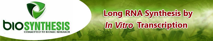 Long RNA Synthesis by In Vitro Transcription
