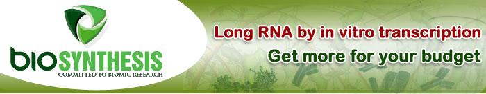 Long RNA Transcription Synthesis