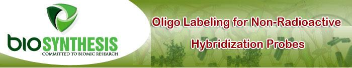 Oligo Labeling for Non-Radioactive Hybridization Probes