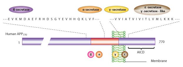 Biosyn beta amyloid peptide conjgates